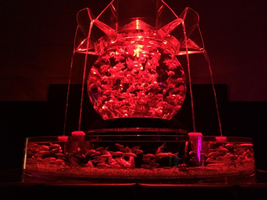 アートアクアリウム名古屋 花魁