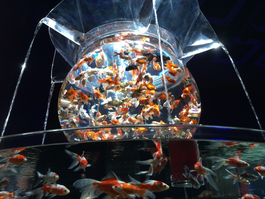アートアクアリウム展 花魁 名古屋 金魚の雅