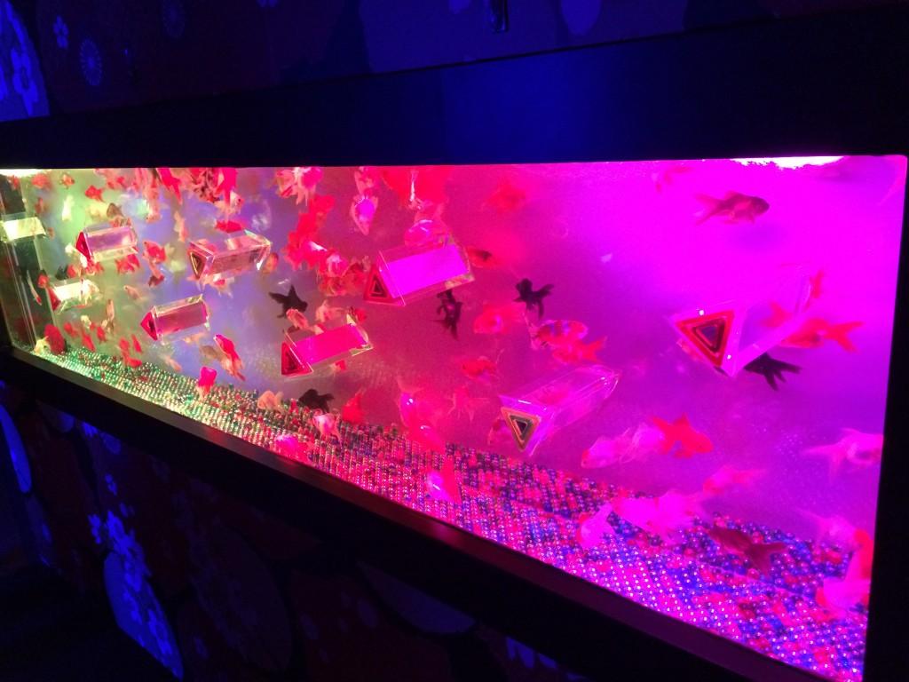 アートアクアリウム展 万華鏡 名古屋 金魚の雅