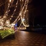 藤枝市蓮華寺池公園のイルミネーション!