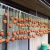 ある日の日記。息子と実家で干し柿を眺めてカニと戦う。