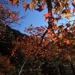 藤枝市の紅葉スポット「滝ノ谷不動峡」を散歩してきた。