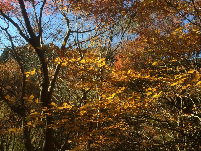 藤枝の紅葉